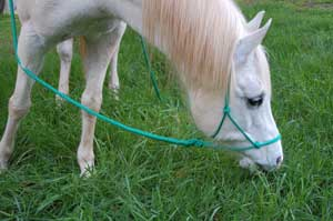 natural horsemanship rope halter and lead rope on horse grazing